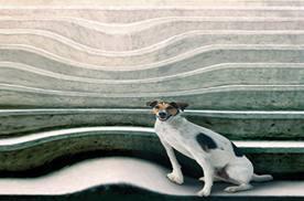 El edema macular puede hacer que las líneas rectas las veamos deformadas.
